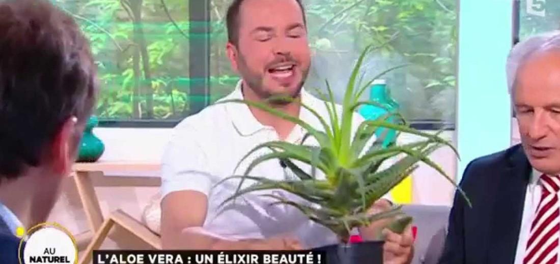 Aloe-vera-France5